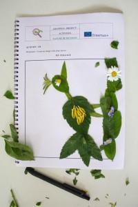K1024_3. Δημιουργίες με φυτά (6)