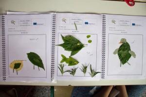 K1024_3. Δημιουργίες με φυτά (7)