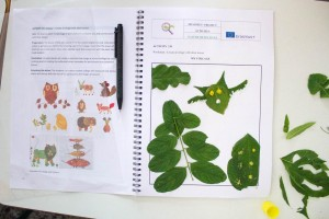 K1024_3. Δημιουργίες με φυτά (9)